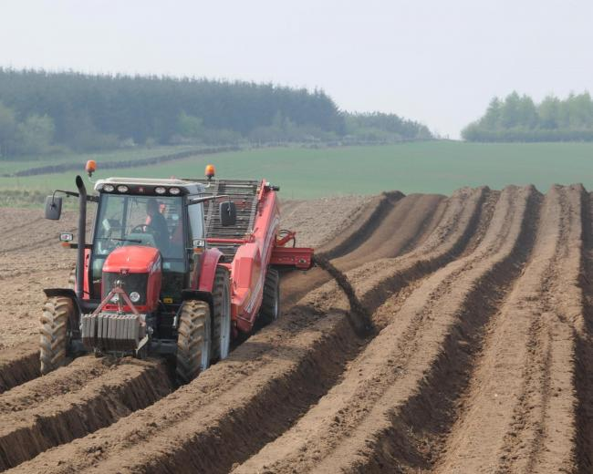 Fertilising potato beds, at the James Hutton Institute, Invergowrie.