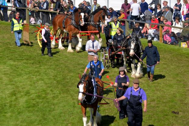Clydesdale celebartion in the main ring Ref:KC210619002