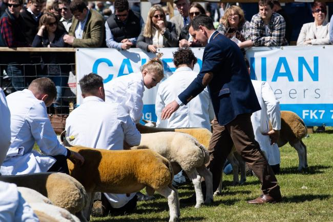 Judging the Royal Highland Show sheep