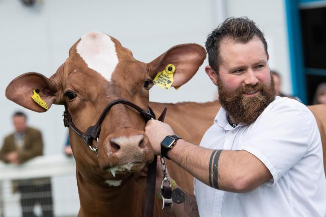 Exhibitor Brian Weatherup during the dairy judging   Ref:RH210619159    Rob Haining / The Scottish Farmer