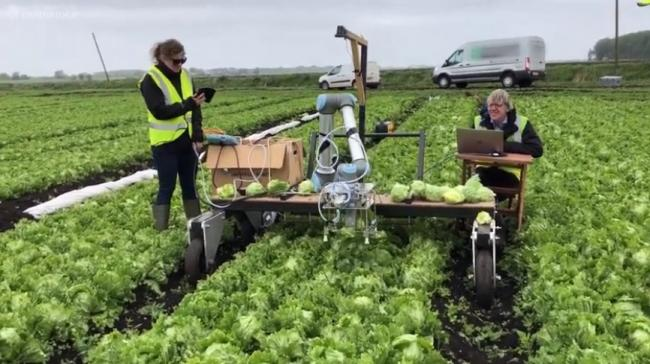 The Vegebot harvesting system undergoing field experiments (Pic: YouTube)
