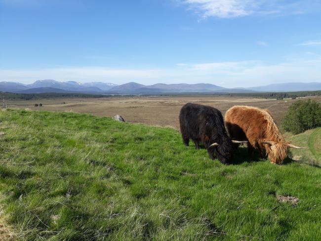 EXTENSIVE GRAZING is the keystone of crofting