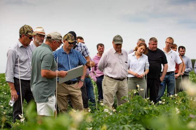 Growers at Hutchinson's fenland potato demo were keen to see how different varieties fared under high PCN pressure