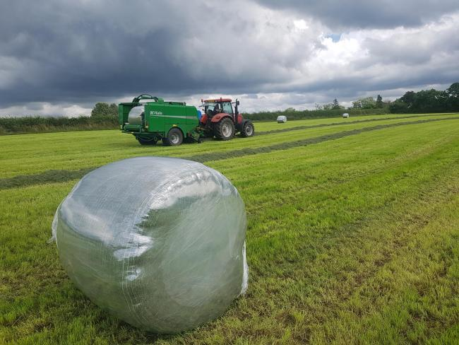 Fourth cut silage baling using Unterland Crystal clear wrap on the farm of John and Craig Barkley, Ballymena Co Antrim