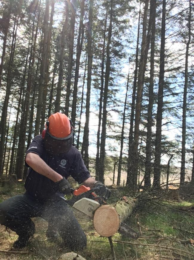 To help farmers find out more about diversifying into new woodlands, or thinning and felling existing woodlands, FAS is holding a free event in Strichen, Aberdeenshire, later this month.