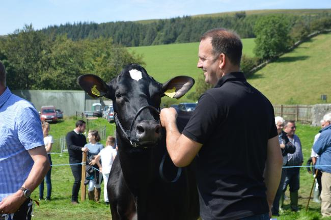 Aintree Topsy Florence takes the red ticket in the dairy lines at Colmonell and Ballantrae show
