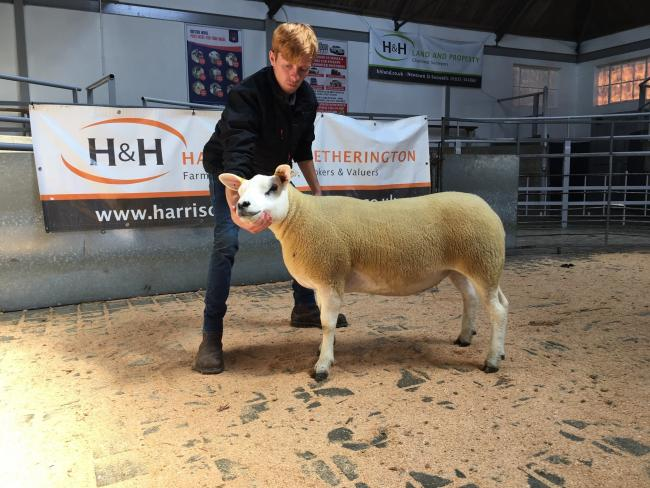 Top priced gimmer at £600 from Holylee