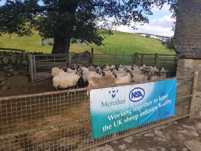 CONNACHAN hosted the Moredun's sheep health event