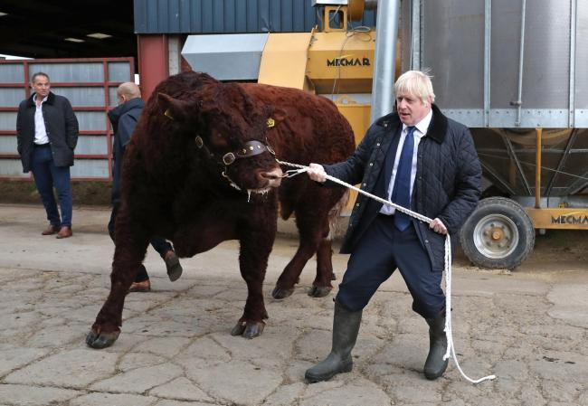 A BULL being walked by Prime Minister Boris Johnson during a visit to Darnford Farm in Banchory near Aberdeen (Photo: Andrew Milligan/PA Wire)