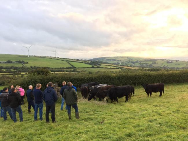 Participants from local Business Development Group discussing the merits of using Galloway cows for managing the upland areas on the Dougherty's farm in Newbuildings