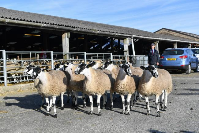 Top priced ewe lambs at £370 from Messrs Lord