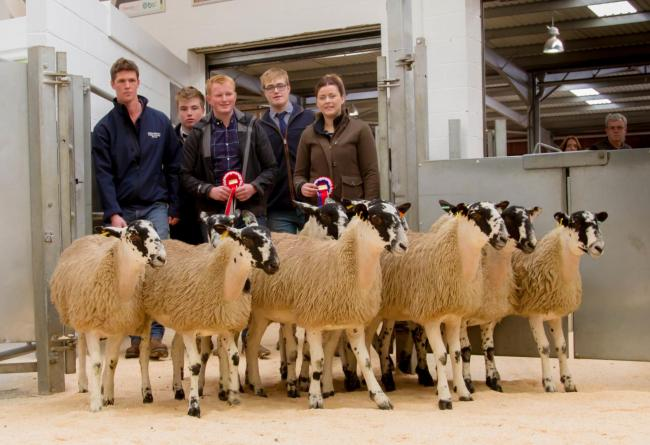 Champion pen of Mule ewe lambs from R Lawrence, pictured with (L-R) sponsor Peter Horn, judge Josh Geary, vendor Bob Lawrence, judge James Dickinson and vendor Emma Handley