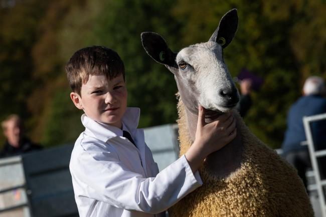 AT LANGHOLM Show, the South West of Scotland young handler championship was decided, with 13-year-old James Drummond, of Cassington Farm, emerging supreme with his Bluefaced Leicester gimmer. Ref:RH280919063  Rob Haining / The Scottish Farmer