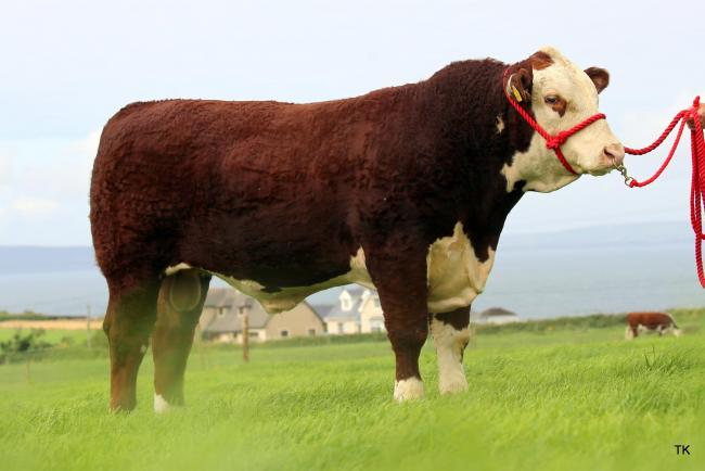 Gouldingpoll Stockman sold for €8400 to Cogent