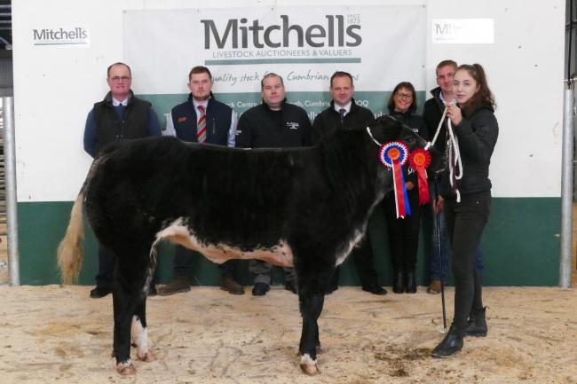 Champion heifer from I and R Millard, Old Hyton