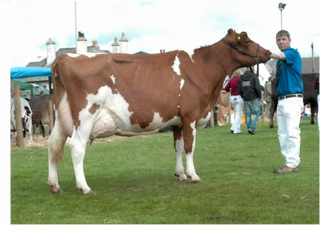 Stevenson's Bunty 114 ExX94-2E sold for the second top price of 2500gns