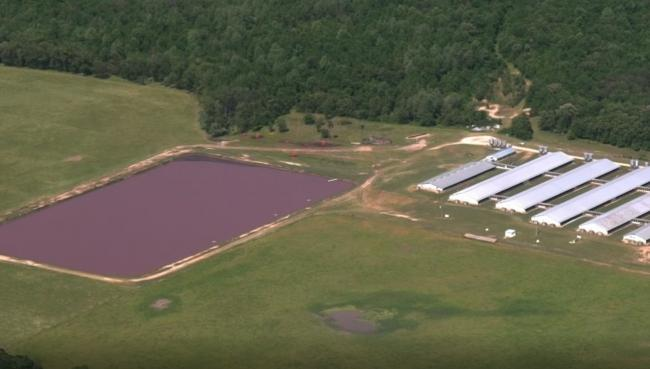Aerial footage of pig manure lagoons in North Carolina taken from the BBC documentary - Meat: A threat to our planet?