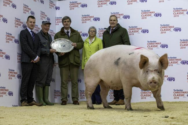 CAST SOW champion at this year's ANM Christmas came from William Donald of LC Donald and Son, South Itlaw, Banff, flanked here by Cheale Meats procurement manager Edward Johnstone and judge Adam Cheale, Jenny Elsrickle of ANM, and John Taylor of SPP (