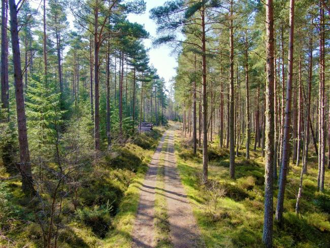 Forestry is trading at an average of £11,478 per stocked hectare