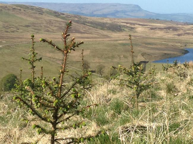 Scotland is leading the way in official support for tree planting