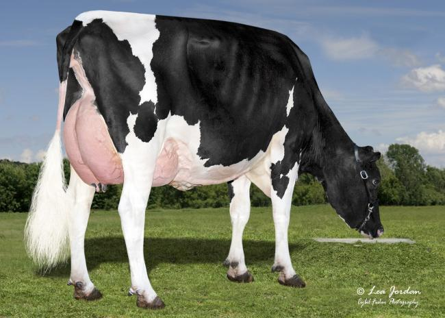 Daughter of the No 1 proven Holstein sire, Bomaz AltaTopshot