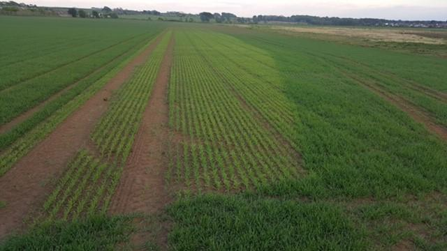 The light area is where the spring barley seed has been broadcasted, while the darker are has been combi-drilled