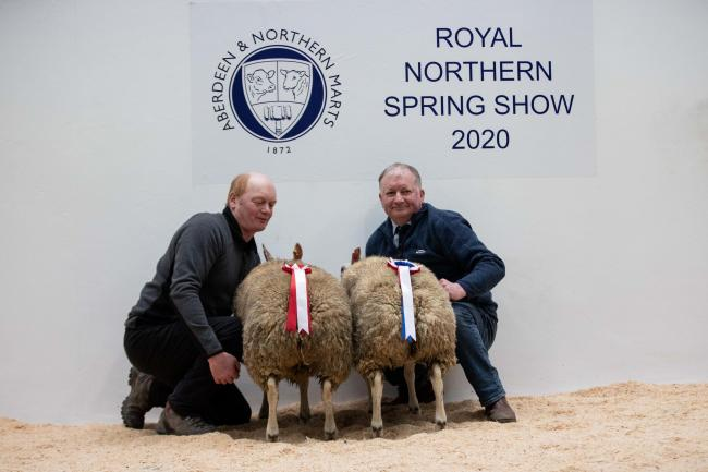 Roddy and Hugh Thomson stood champion in the prime sheep section with this Beltex cross Texel pair of hoggs  Ref:EC2602203213