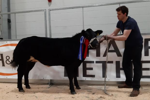 Reserve champion sold for the top price of £4200 for John and Craig Robertson