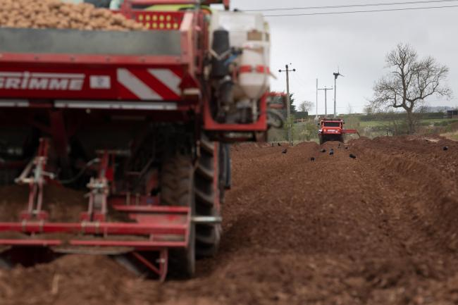 The J R Thomson and Sons team from Mungoswall farm, near Duns in the Scottish Borders, were busy planting Saxon potatoes this week   Ref:RH170420957  Rob Haining / The Scottish Farmer...