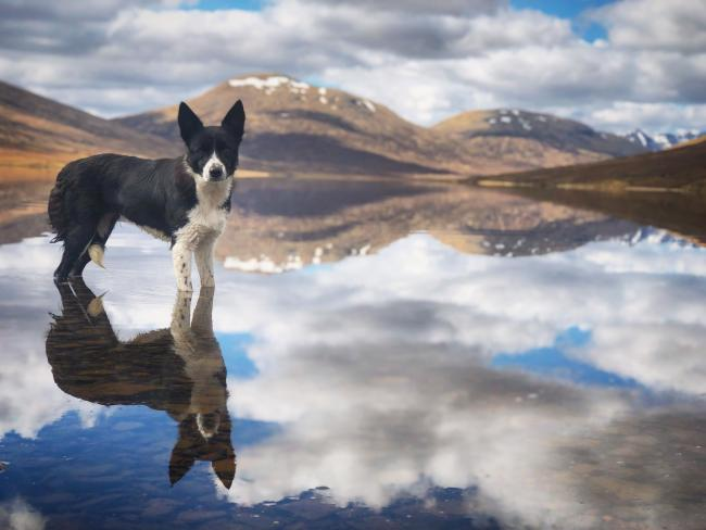 Dog in water, from Farquhar Renwick, of Ullapool