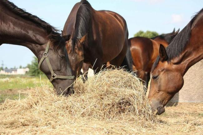 BEVA has urged horse owners to help reduce risk of antimicrobial resistance