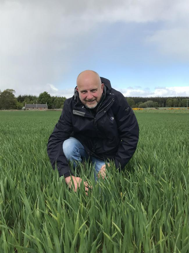 John Murrie of Agrovista in a crop of KWS Jackal in mid-May