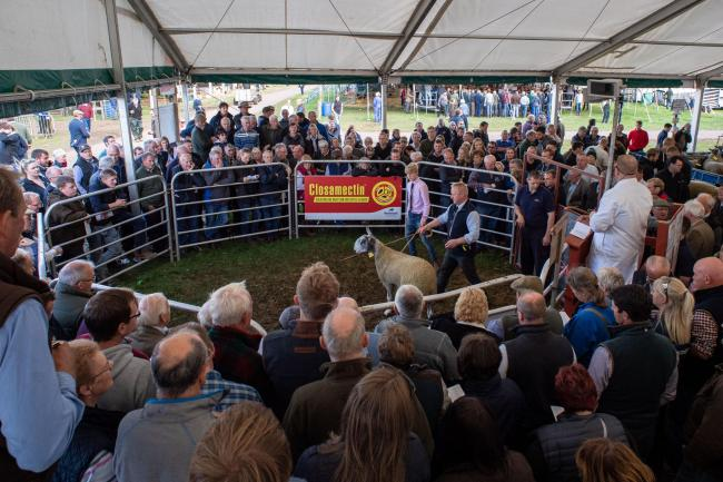 The loss of Kelso Ram sales will be felt hard by the farming community Ref:RH130919137  Rob Haining / The Scottish Farmer