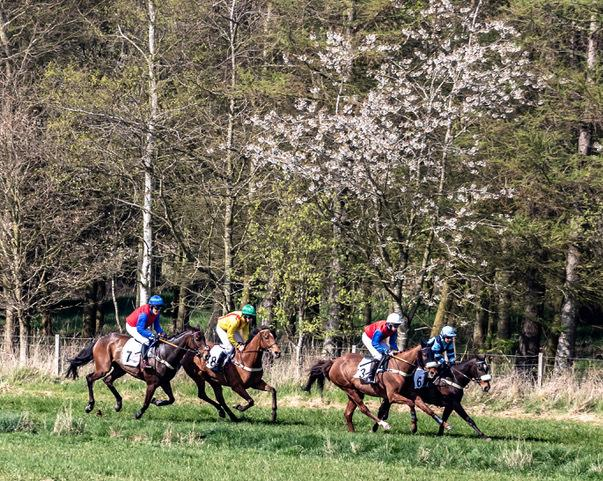 The photo shows the four runners in the 2019's £1500 mixed open heading up the back straight on the first circuit – from left to right: Racing Pulse (Jamie Alexander) which was first; Roo Roo (Jack Teal) PU; Killer Crow (Kit Alexander) thi