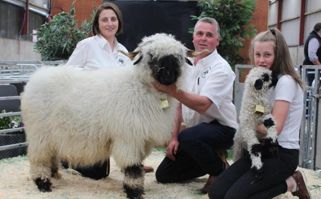 Sale leader at 4800gns was this ewe and ewe lamb pictured with Selina, Richard and Sarah Beattie