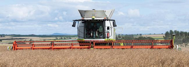 Claas Lexion 780 equipped with the Claas Vario 1230 which has a cutting width of 40 feet, and using the John Deere machine guidance system makes light of the OSR crop  Ref:RH030820320  Rob Haining / The Scottish Farmer...
