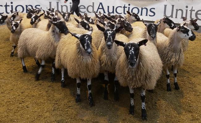 A new record average of £112.91 was achieved for ewe lambs