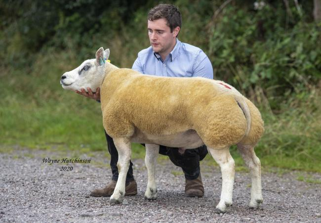 Boothlow Ecstasy sold for the top price of 880gns