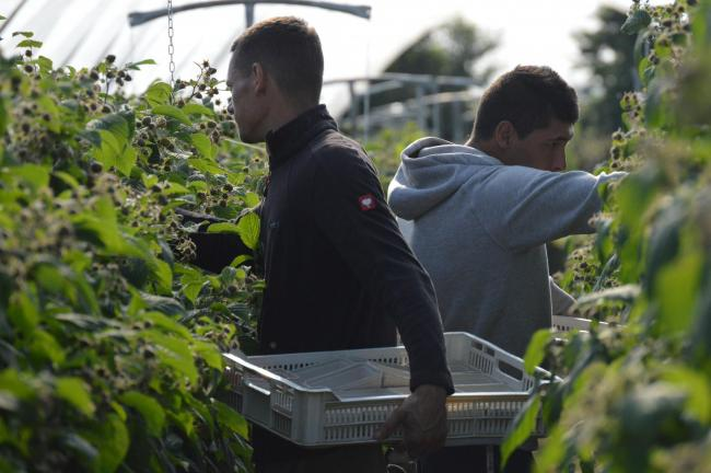 More than 40% of NFUS horticultural members have stated that they would cease activity altogether if they could not recruit workers from outside the UK