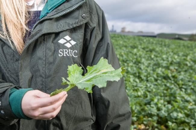New findings reveal Scotland's Rural College (SRUC) provides more business value to SMEs than any other higher education institution in the UK
