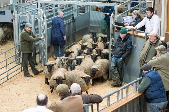 Prime sheep sales remain strong