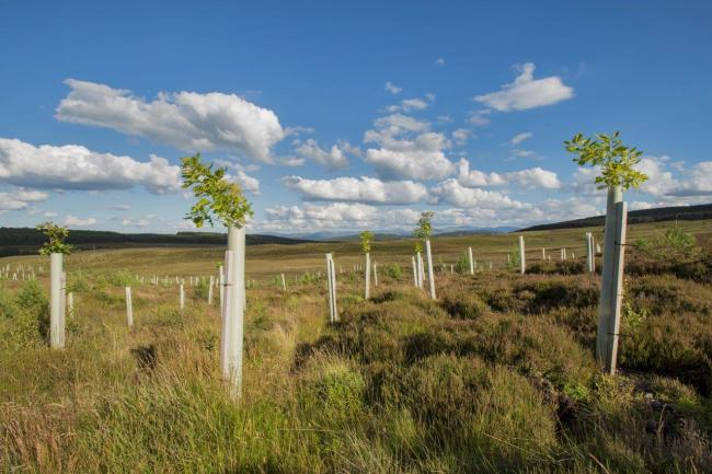 Young trees protected by tree guards