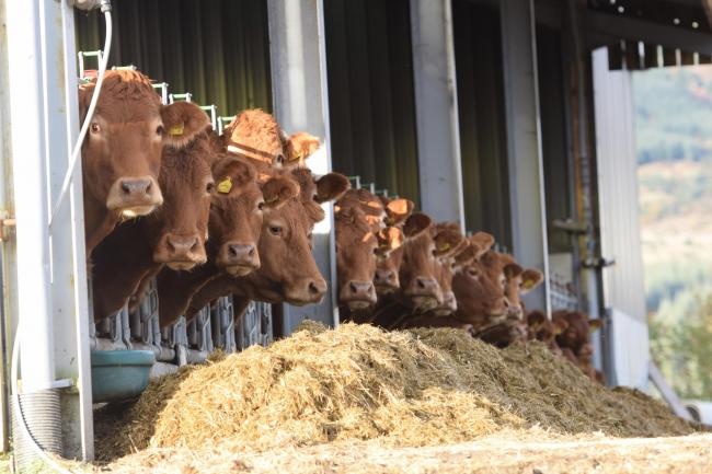 Farmers reminded that livestock cleanliness can benefit their bottom-line
