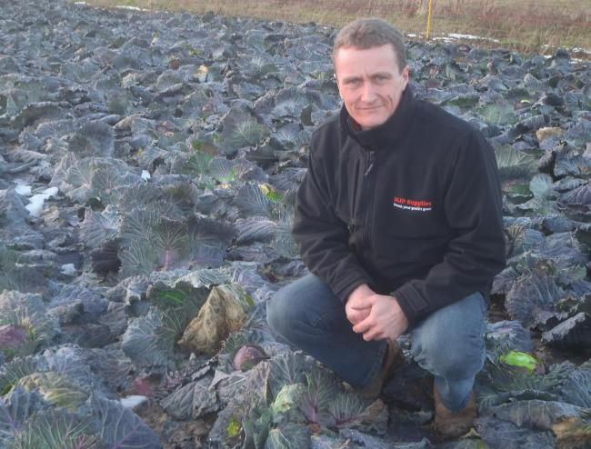 Marcus Palmer is using and selling the seaweed-based bio-stimulant, Algifol