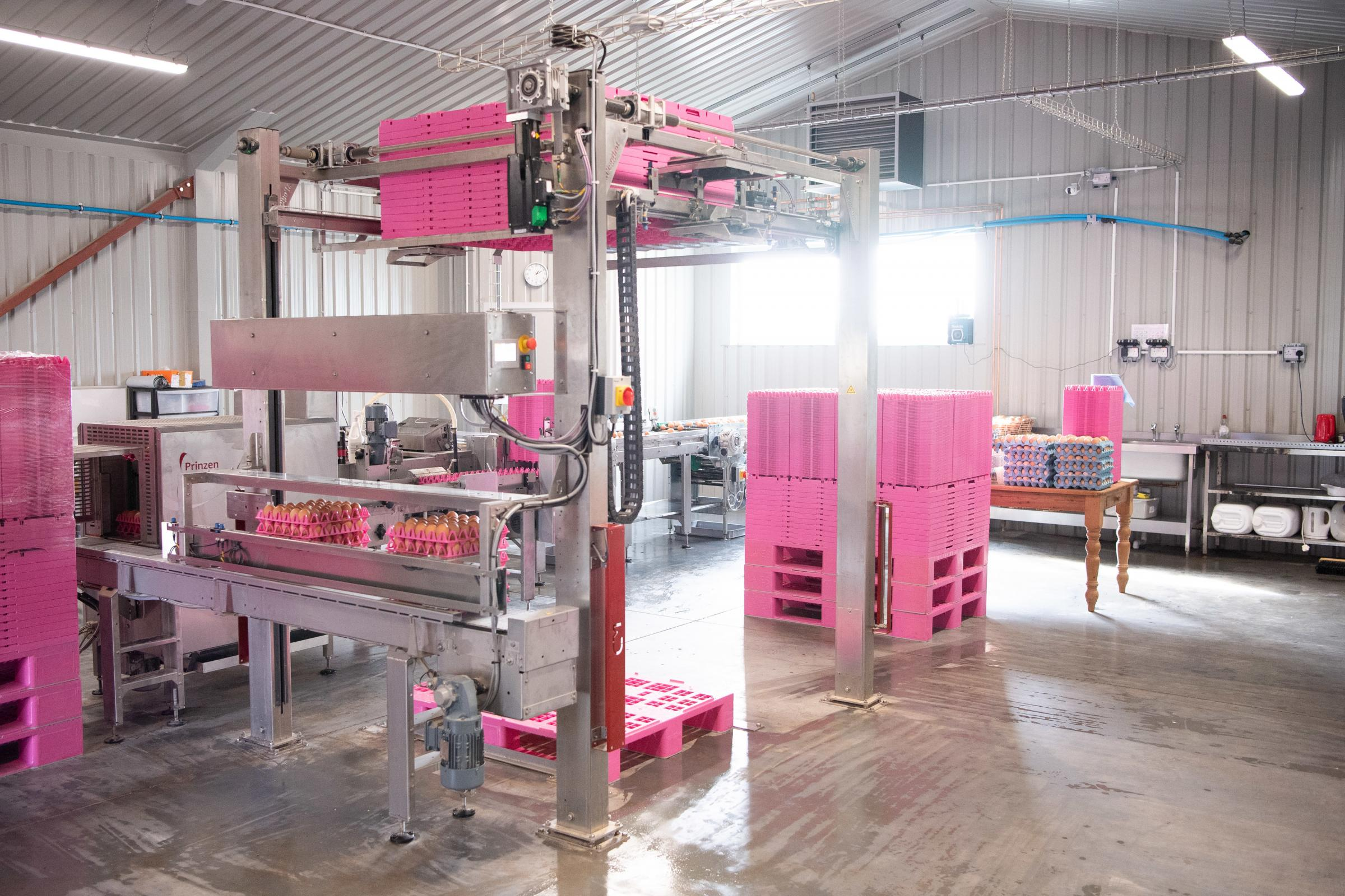 Egg packing shed, all eggs are placed on trays then automatically stacked on to pallets Ref:RH210321150 Rob Haining / The Scottish Farmer...