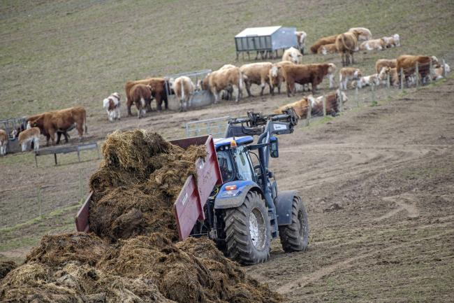 Mucking out time on the hill farm 'Little Ballo' Abernyte, Perthshire (Pic: Ron Stephen)