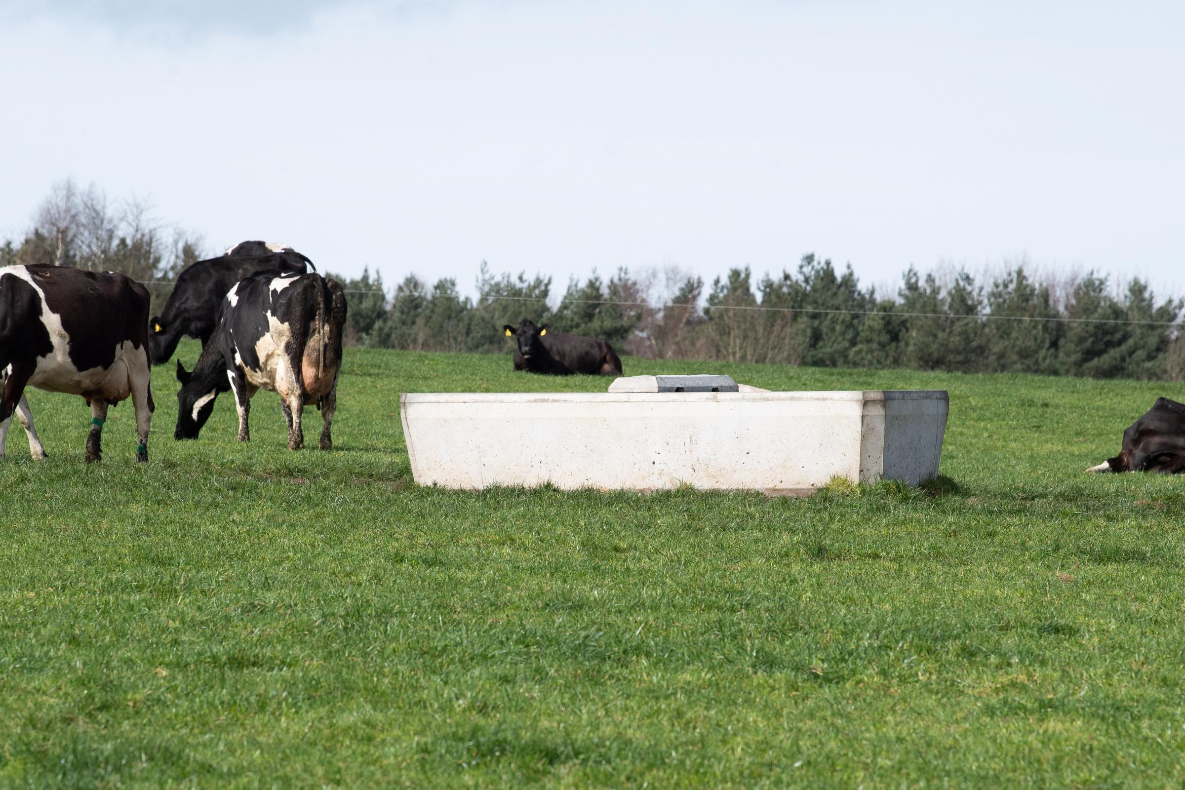 Investement in infrastructure means that all paddocks have concrete troughs to keep the cows well hydrated Ref:RH300321200