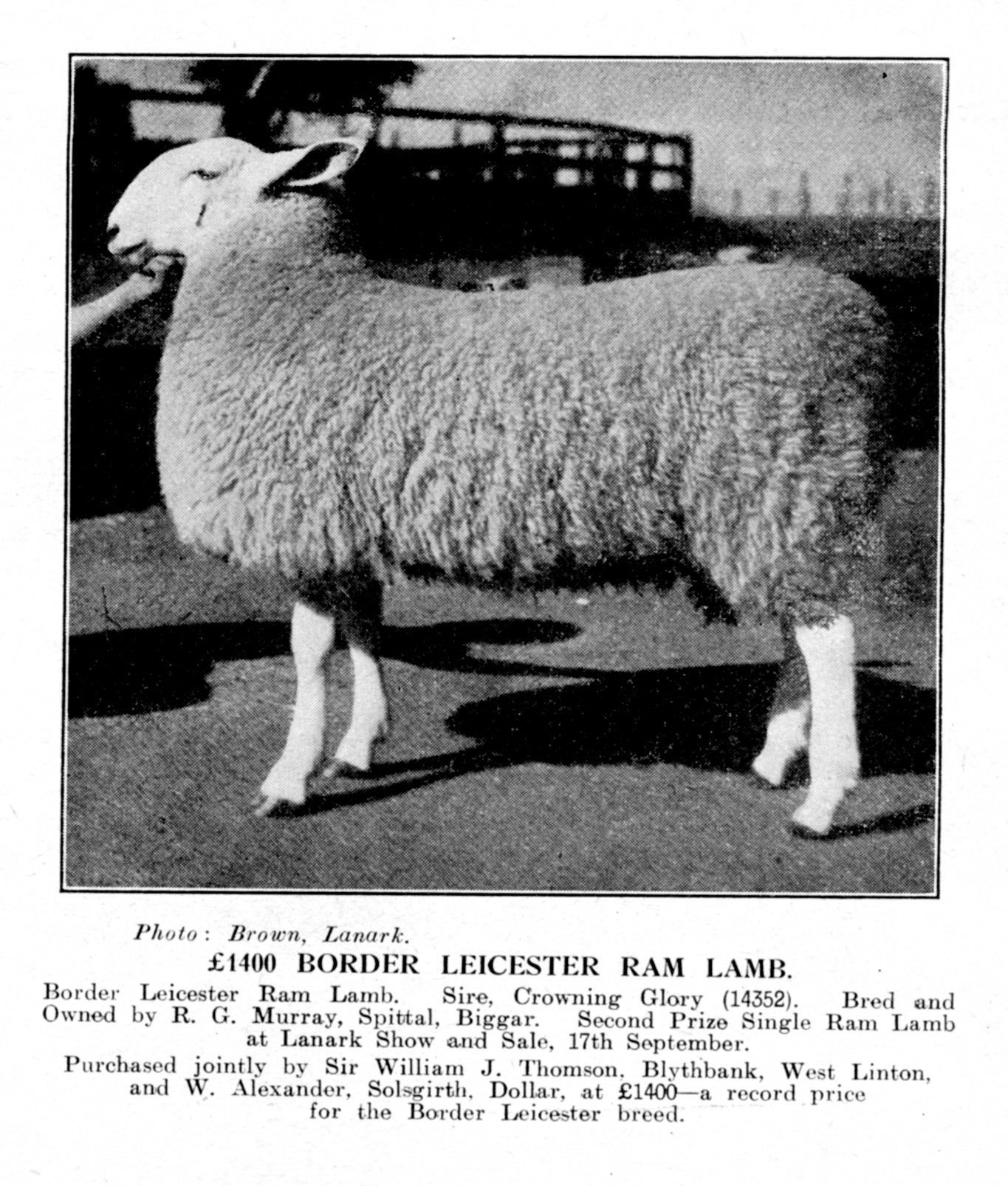 In 1947, this Border Leicester ram lamb from RG Murray, Spittal, Bigger, was bought jointly by Sir William Thomson, Blythbank, Wet Linton, and W Alexander, Solsgirth, Dollar, at a new breed record price of £1400