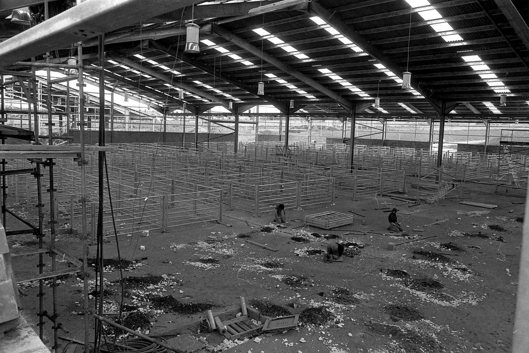 Aberdeen and Northern Marts moved to their new purpose built mart at Thainstone, Inverurie, in 1989 at a cost of £4m