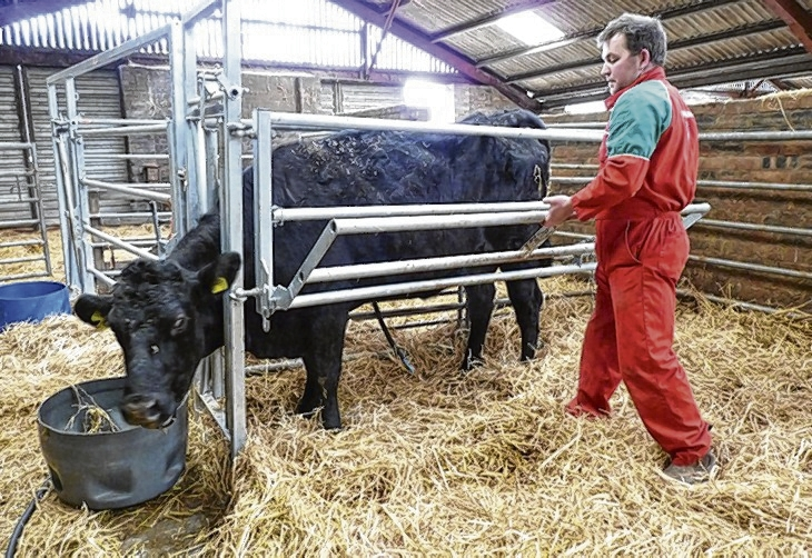 The removal of the side bars allows a caesarean section while the cow is still standing and offers easier acces to suckle calves safely